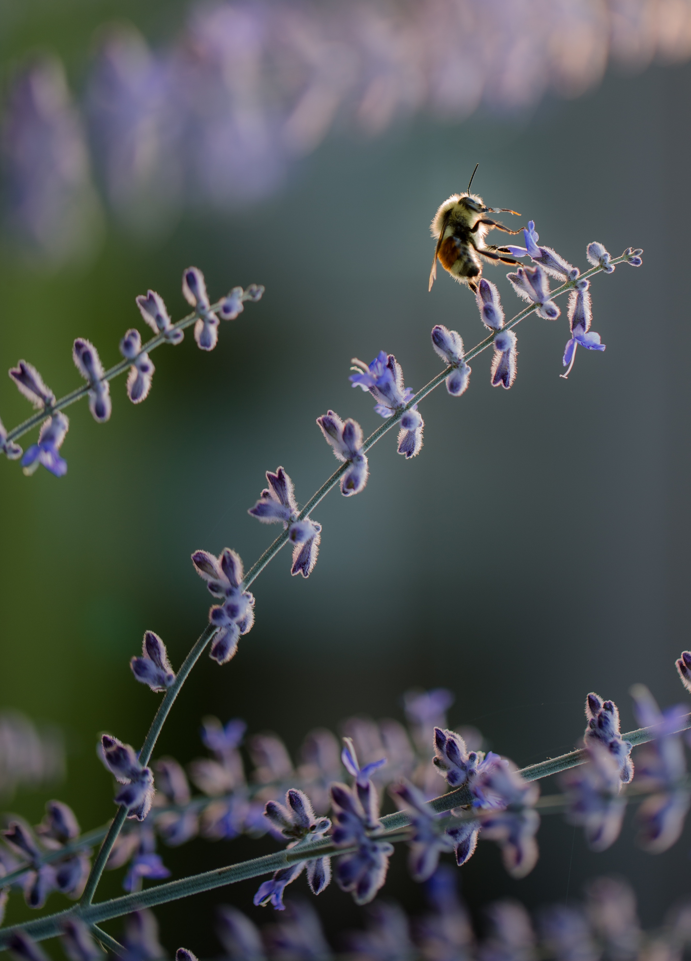 When in doubt - use lavender essential oil