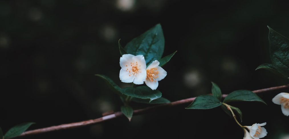 How to heal emotions with flower essences