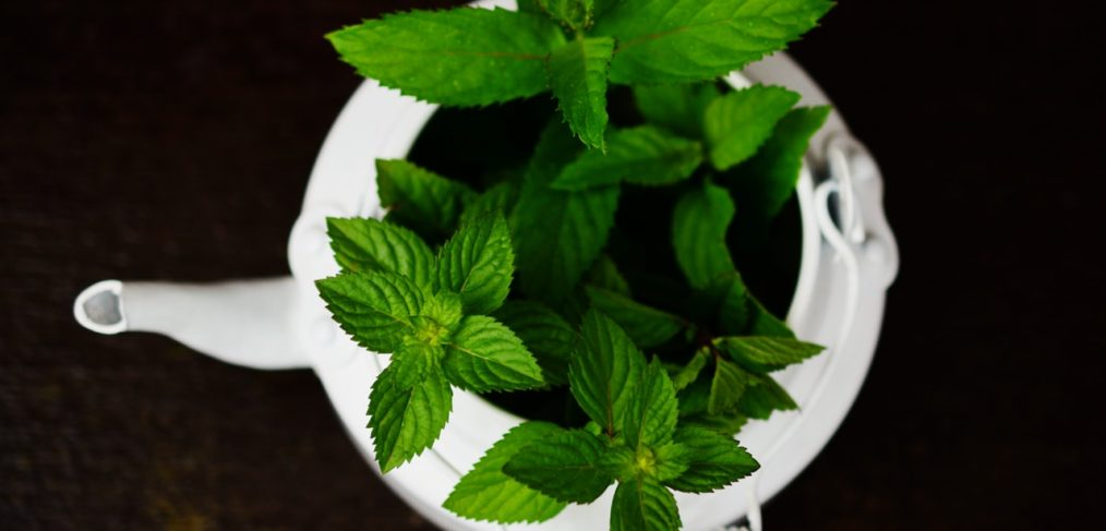 refresh with peppermint essential oil
